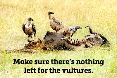 vultures-400x268
